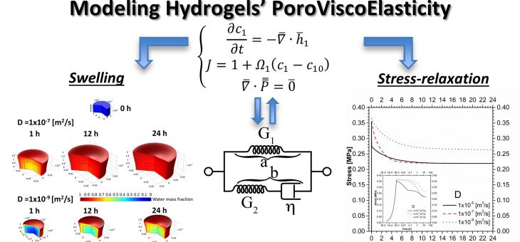 PoroViscoElastic model to describe hydrogels' behavior – Model implementation in COMSOL